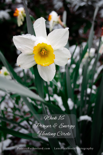 The last traces of winter appeared as the lovely Daffodils opened their hearts to the warmth of spring. Open your heart and eyes to your new beginnings. Mentally see and emotionally feel the changes and shifts you wish to transform about yourself, your lifestyle.